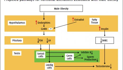 Relação entre obesidade e infertilidade masculina
